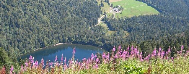 Blick vom Gipfel auf den Feldsee.